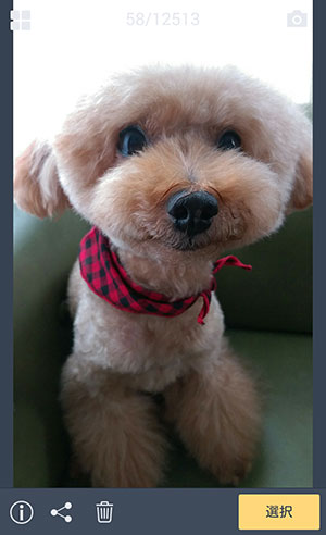 ちび愛犬、トリミングに行ってきて爽やか夏モード