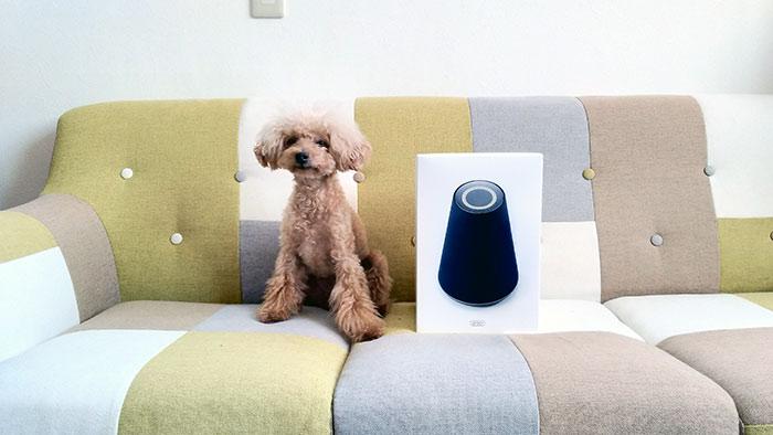 ちび愛犬(トイプードル)とClova WAVEの箱