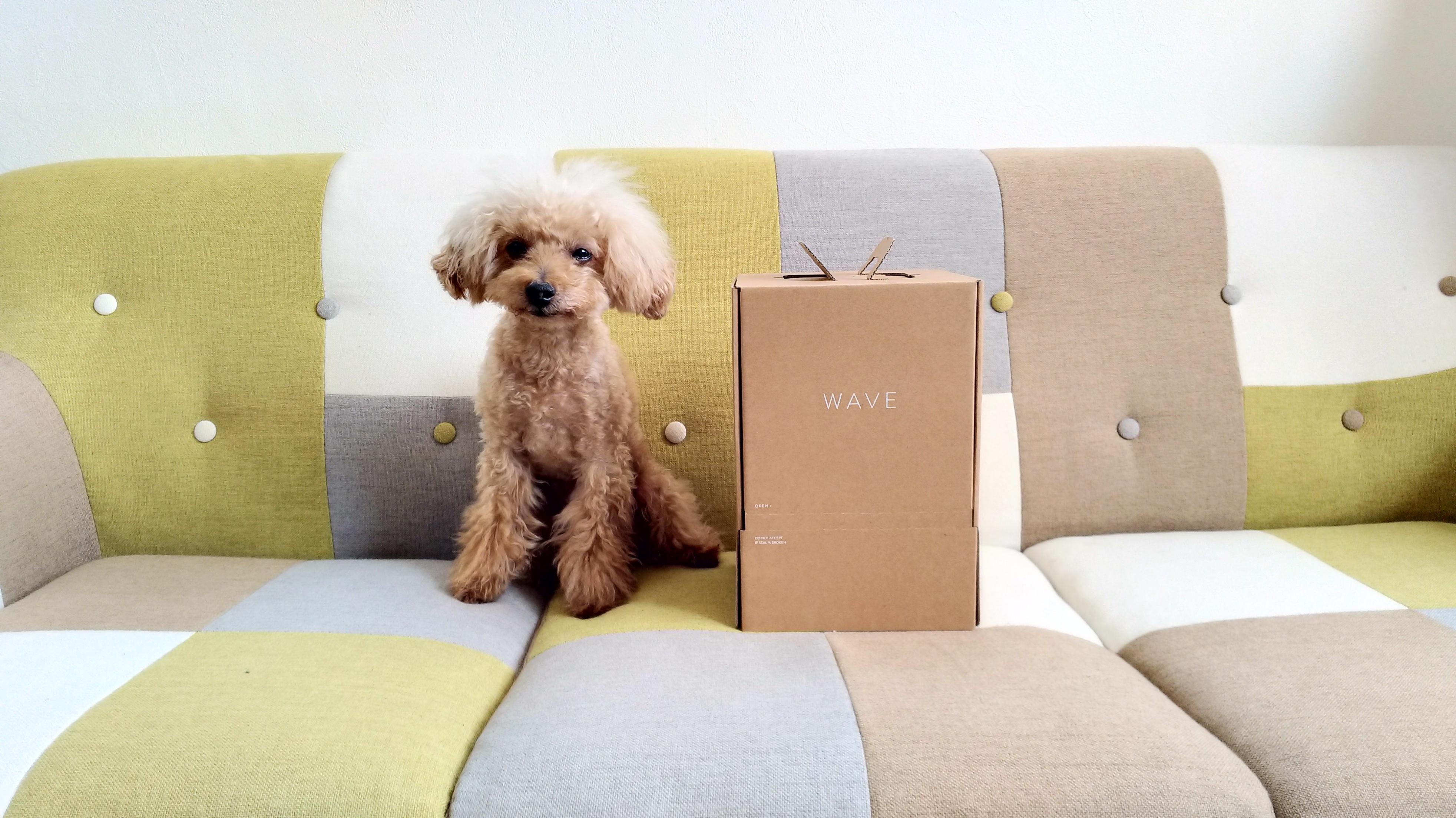 ちび愛犬(トイプードル)とClova WAVEの箱から出した箱