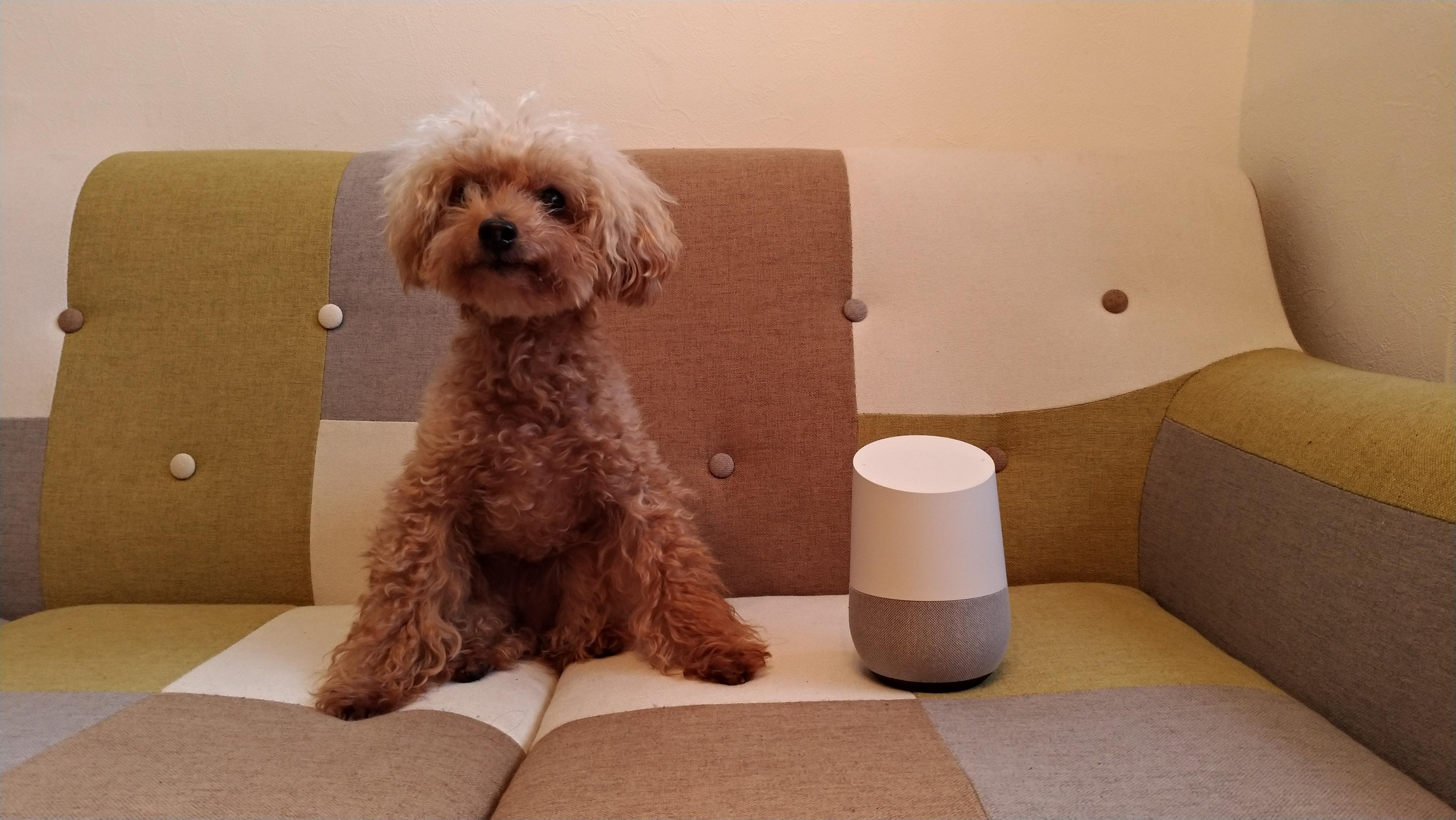 箱からGoogle Home