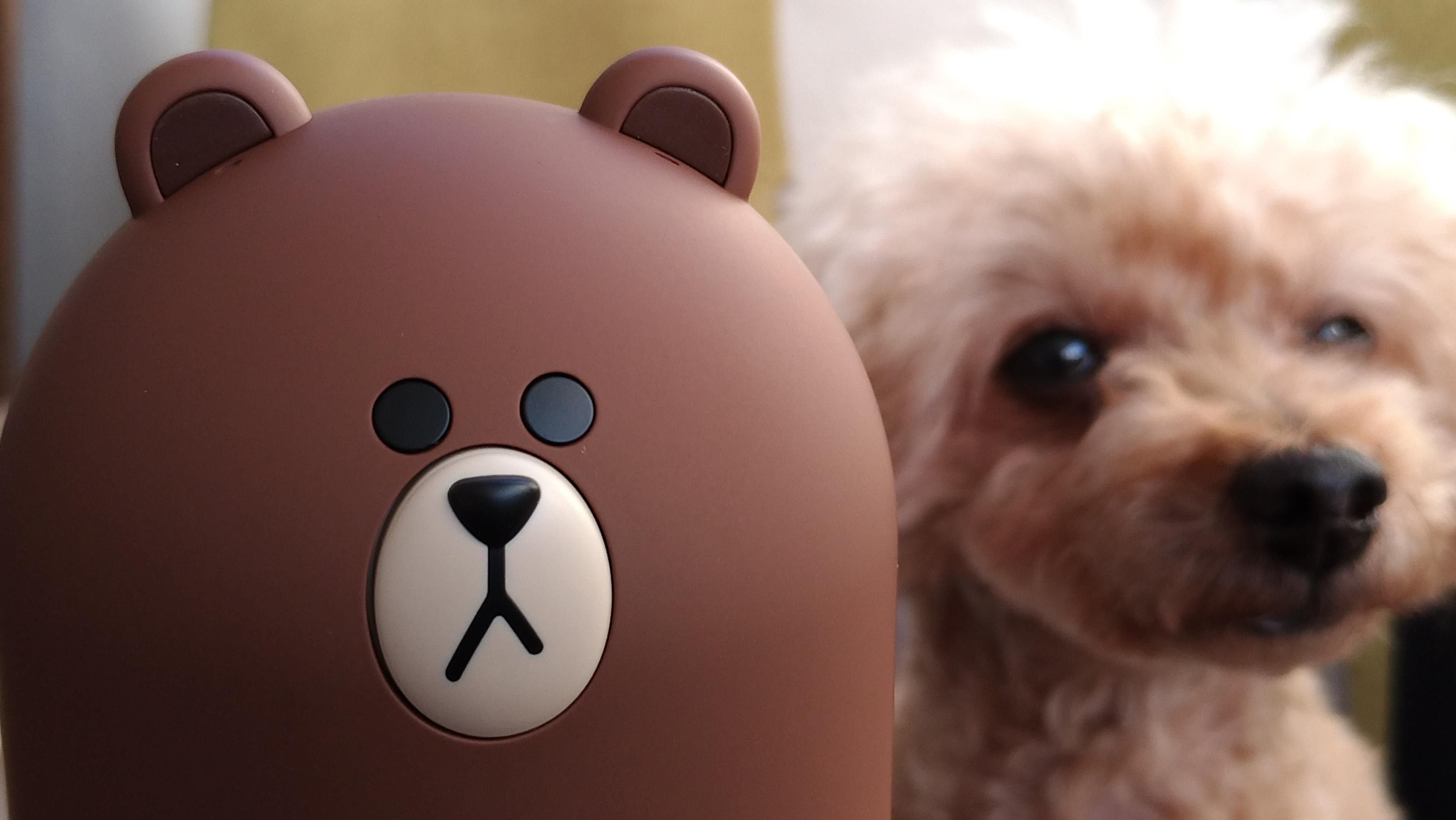 凛とした顔をするブラウン君と愛犬