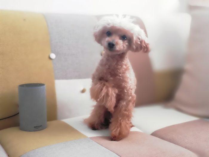 ポートレートモードでちび愛犬