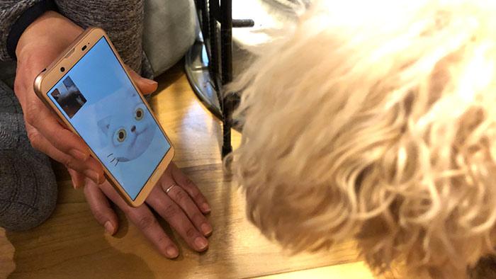 猫のZeniMojiをじ~っと見入る愛犬