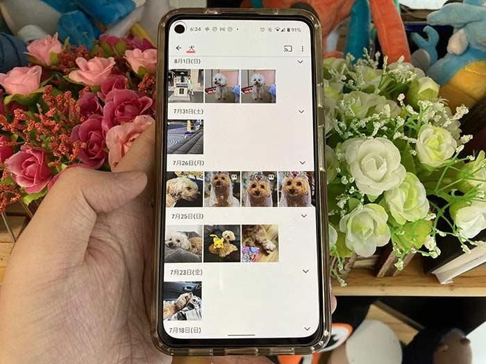 Googleフォト 犬